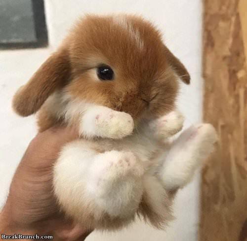 cute-bunny-052319