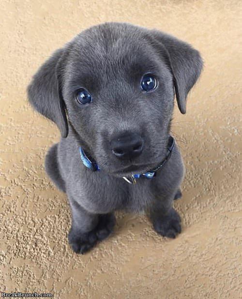 cute-puppy-030119