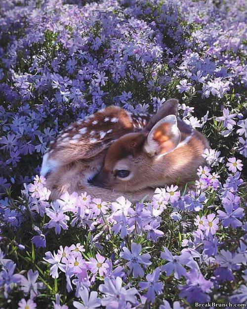 deer-in-flower-031519