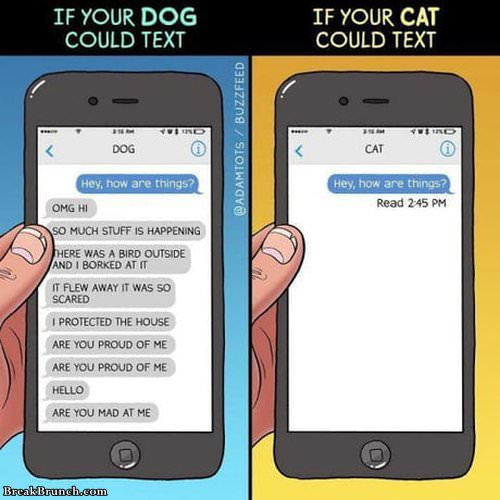 if-cat-and-dog-can-text-032619