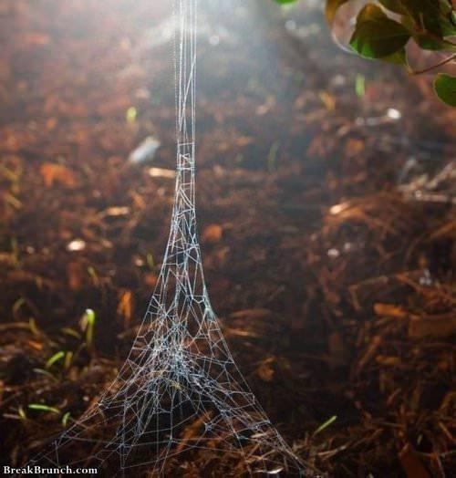 spider-after-visiting-paris-030519