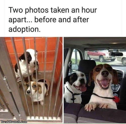 before-and-after-adoption-061619