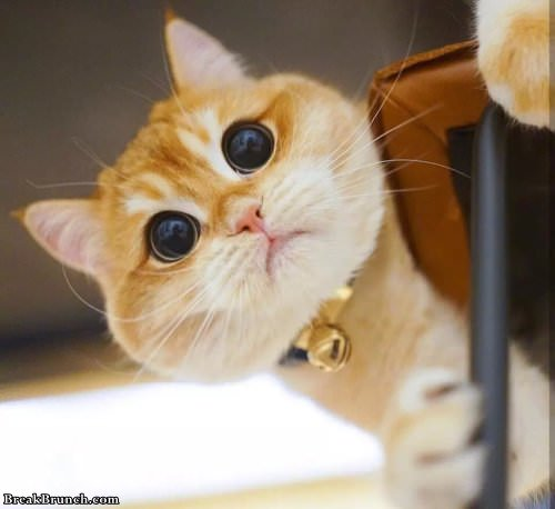 Cute cat with huge eyes (9 pics)