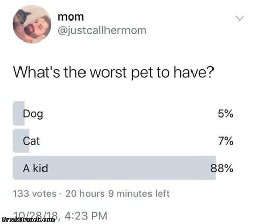 worst-pet-to-have-040219