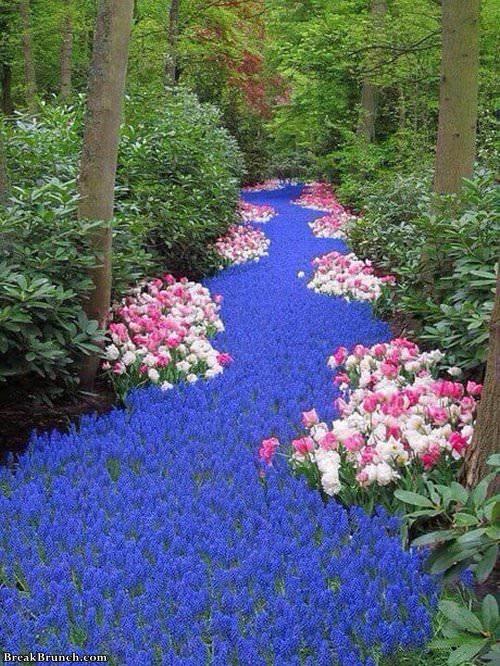 Blue flower river in Netherlands