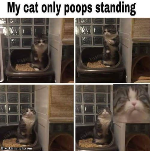 cat-pooping-stand-063019