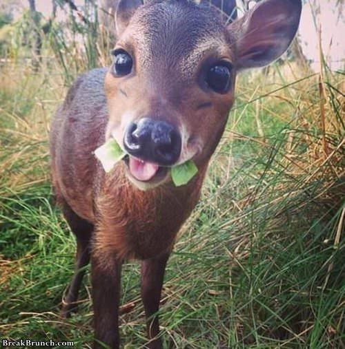 say-hello-to-little-deer-061519