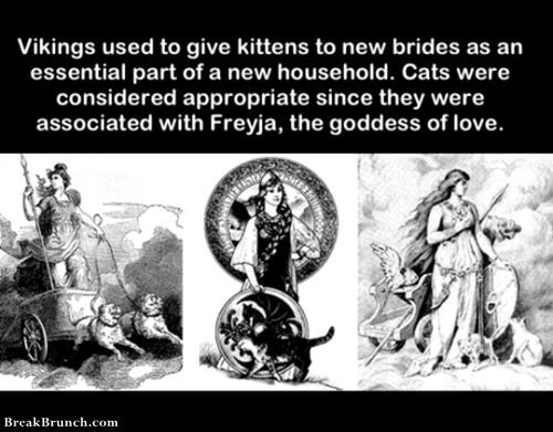 Vikings used to give kittens to new brides
