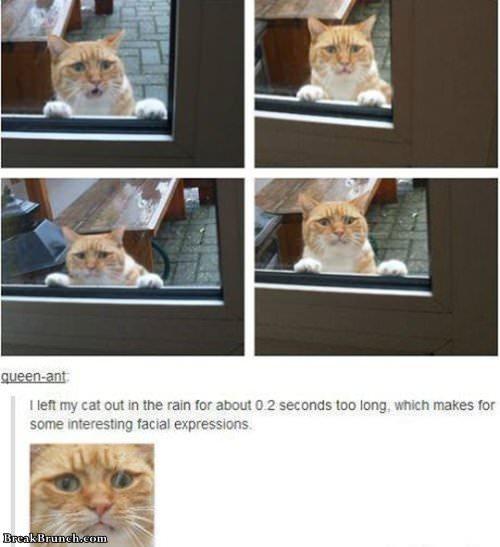 funny-cat-facial-expressions-lolcat