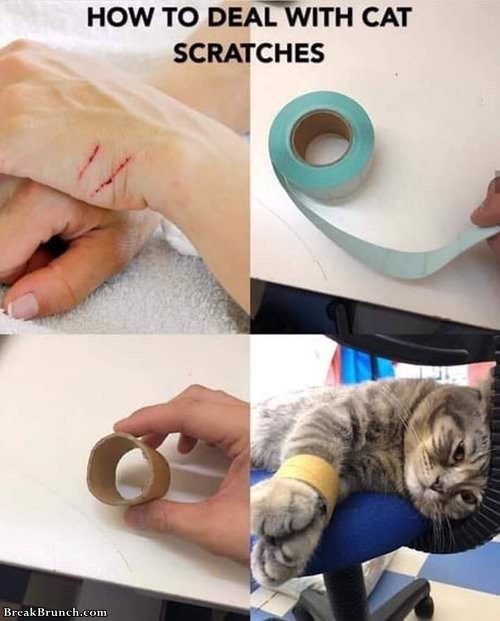 how-to-deal-with-cat-scraches-072419