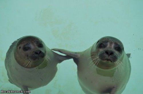 it-wasnt-me-he-did-it-funny-seal-picture