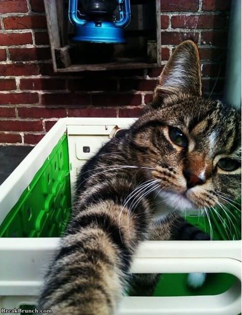 self-shot-for-facebook-lol-cat