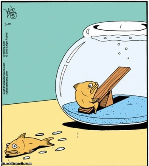 that-one-friend-that-always-gets-us-into-troubles-funny-fish-picture