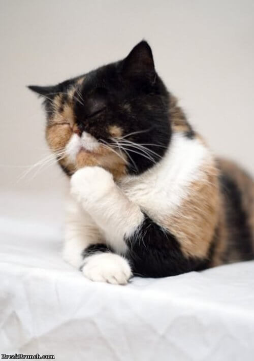 the-thinker-cat-funny-lol-cat-picture