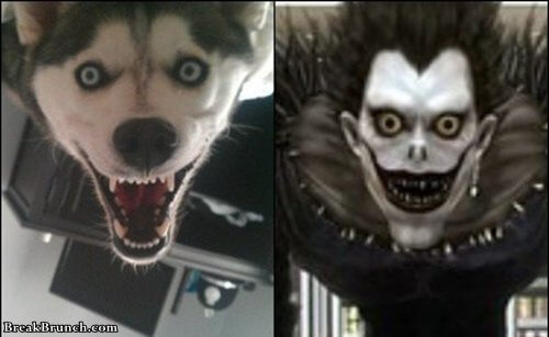 Dog looks like Ryuk from Death Note