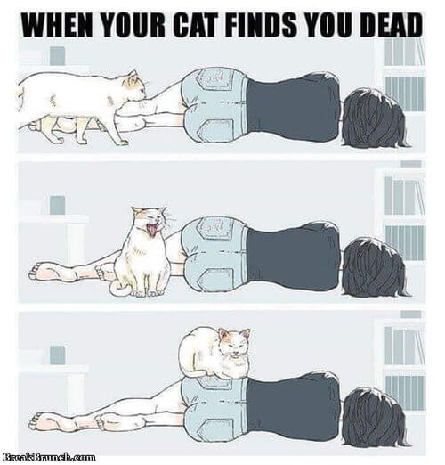 when-your-cat-finds-you-dead-071019