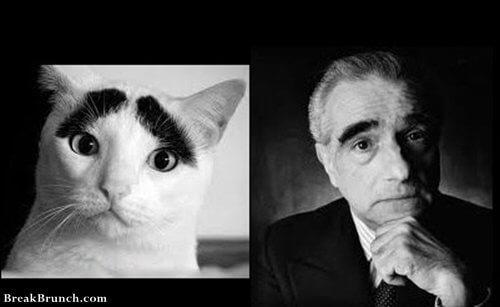 This cat looks like Martin Scorsese