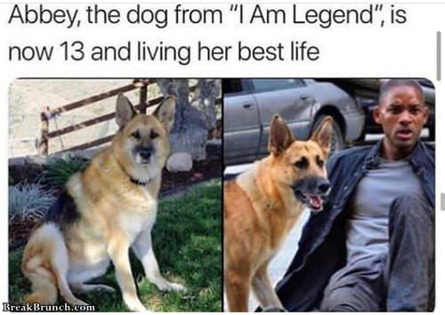 dog-from-im-legend-092619