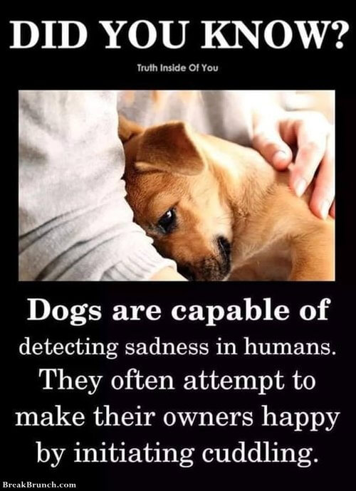 dogs-can-detect-sadness-091519