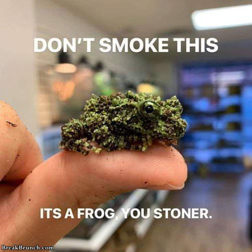 dont-smokle-frog-092519