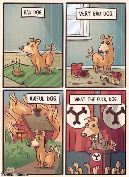 bad-badg-dog-101519
