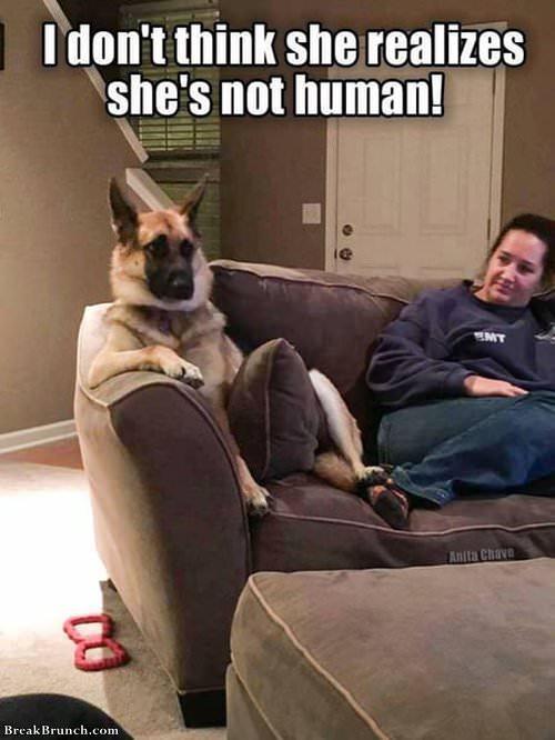 dog-sits-like-human-101219