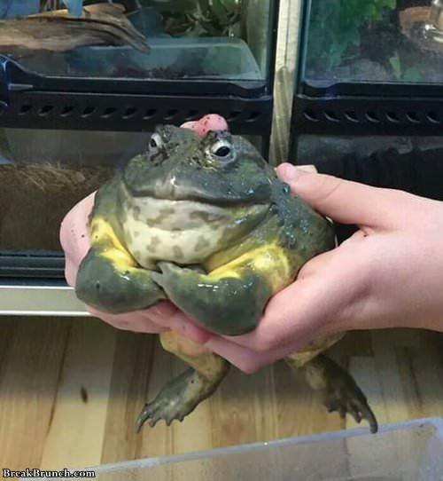 final-boss-toad-100119