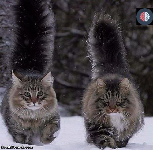 forrest-cat-102419