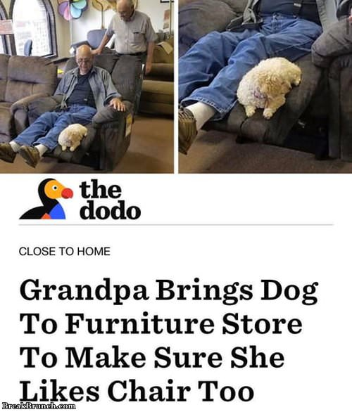 Grandpa brings dog to furniture store