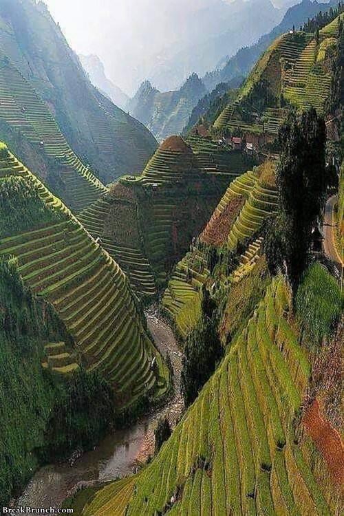 rice-fields-in-vietnam-100519