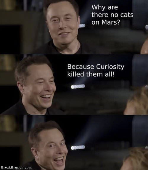 why-there-is-no-cats-on-mars-100619