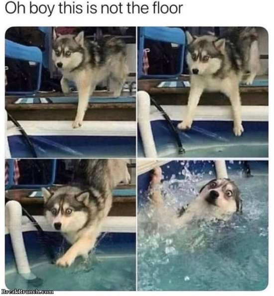 Random: 22 Funny Dank Memes About Dog