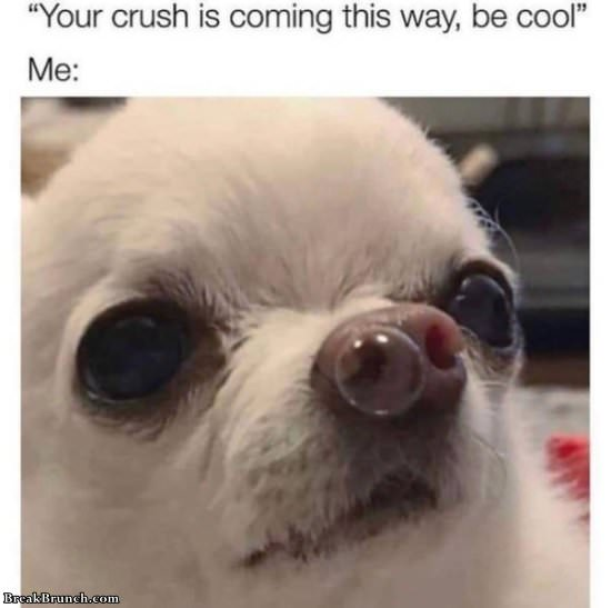 22 funny dank memes about dog