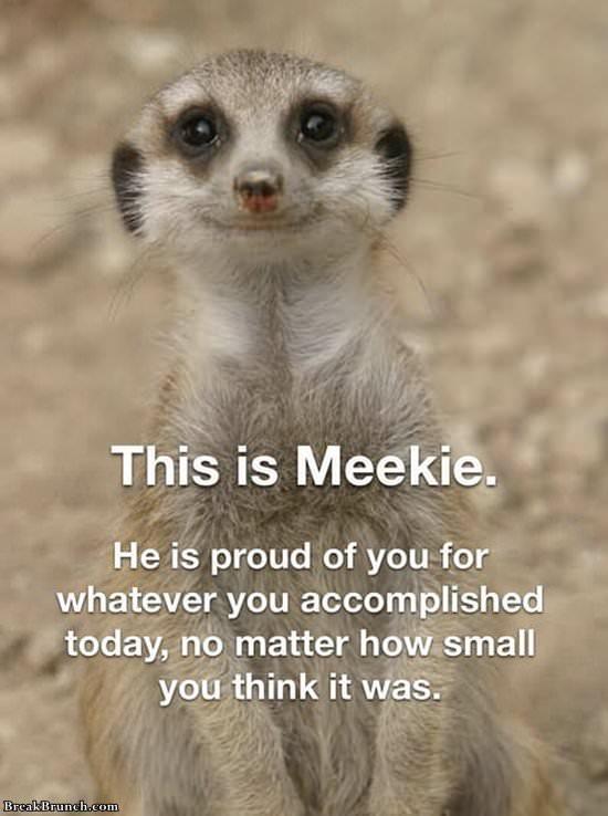 Meekie is proud of you