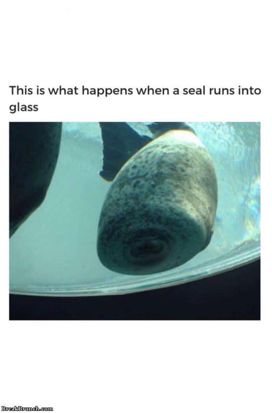 when-seal-runs-into-glass-11719