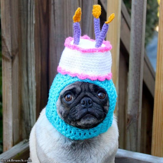 26 cute pictures of animals in crochet hats