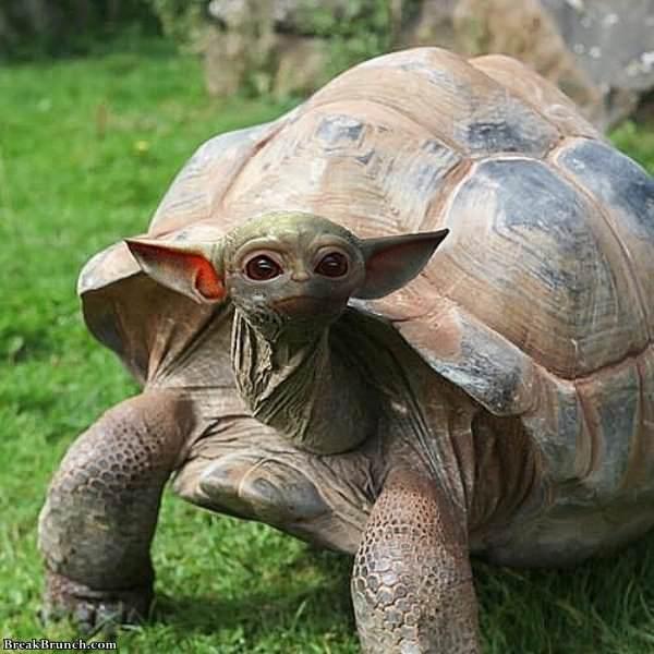 28 Adorable Photoshopped Animals