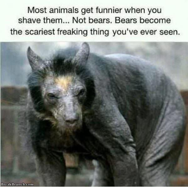 funnier-when-shaved-122319