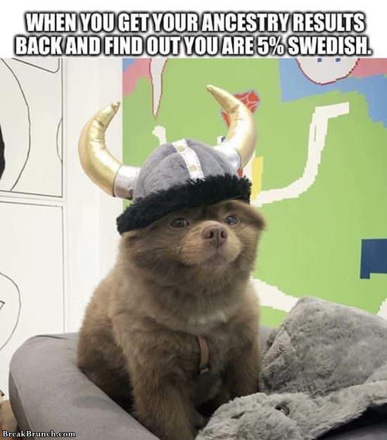 im-swedish-120219