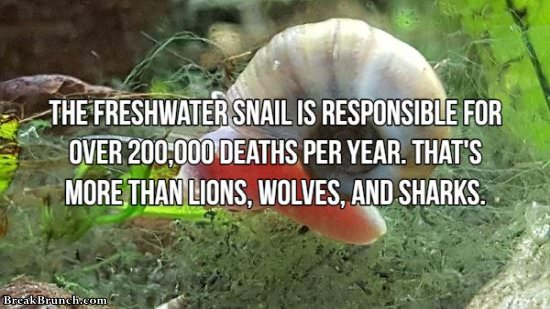 18 interesting facts about dangerous animals