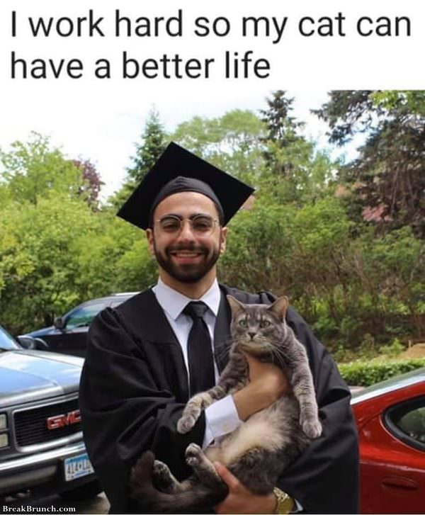 Work hard so cat can have better life
