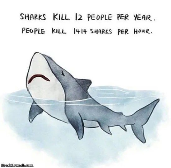 Sharks kill 12 people per year but people kill 1414 sharks per hour