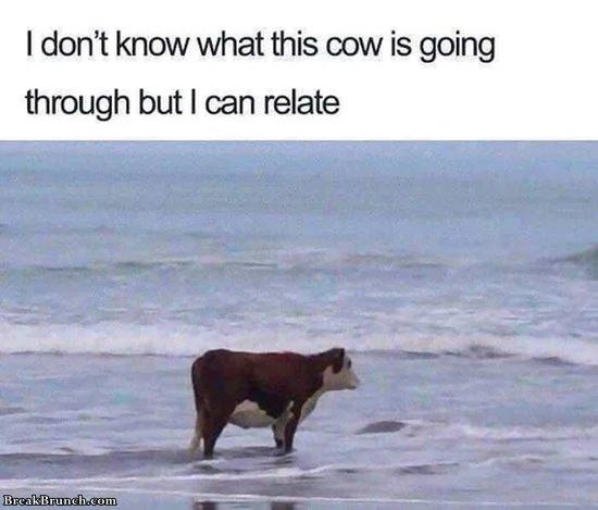 cow-near-ocean-11020