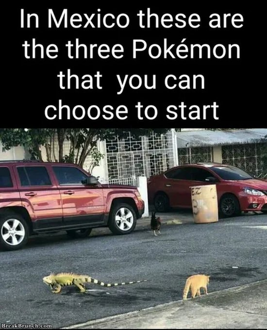 Starter pokemons in Mexico