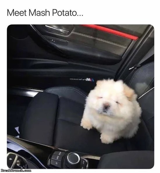 This cute dog's name is potato