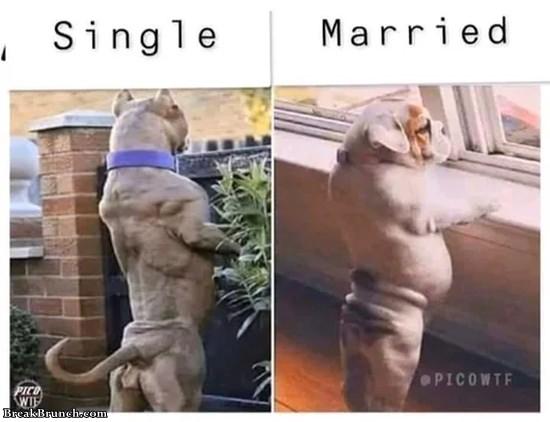Single vs married