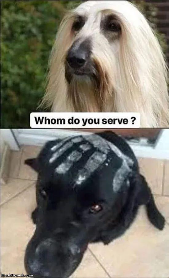 Whom do you serve
