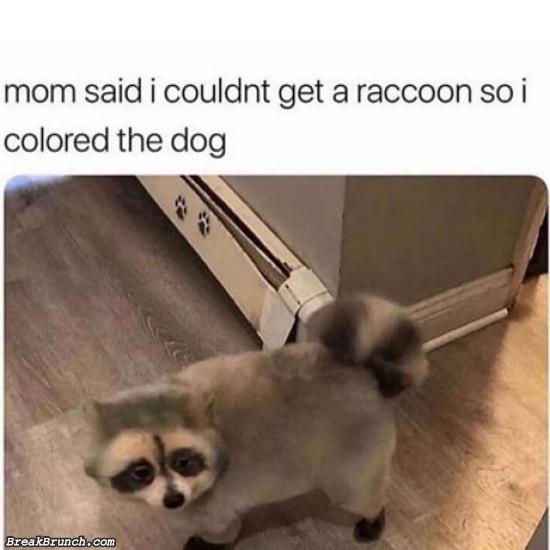 Colored my dog to look like raccoon