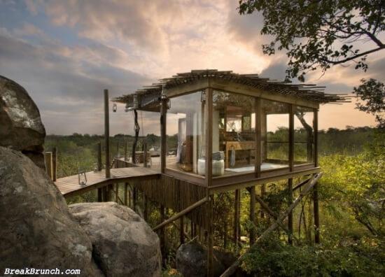 14 beautiful tree houses