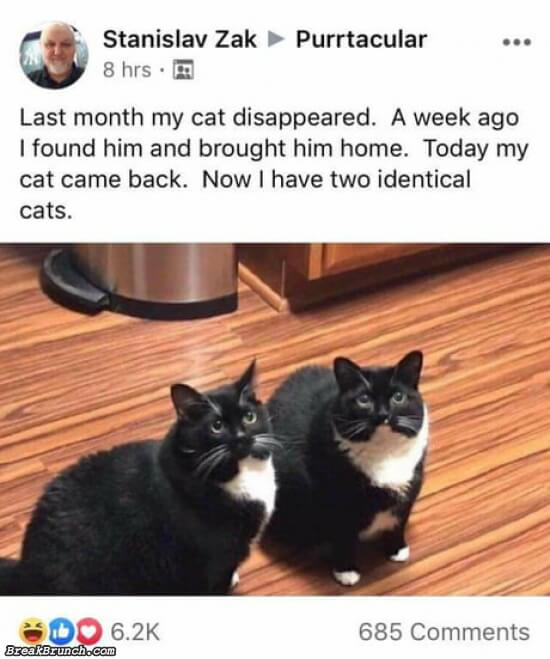 The story of how I got 2 cats